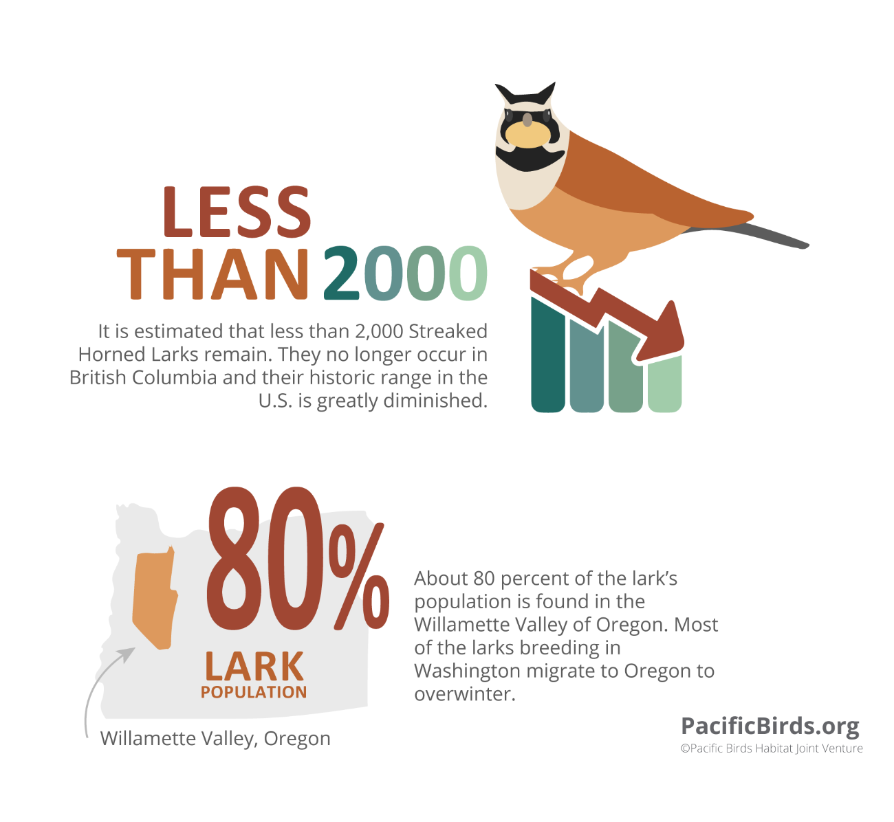 Pacific Birds Priority Infographic