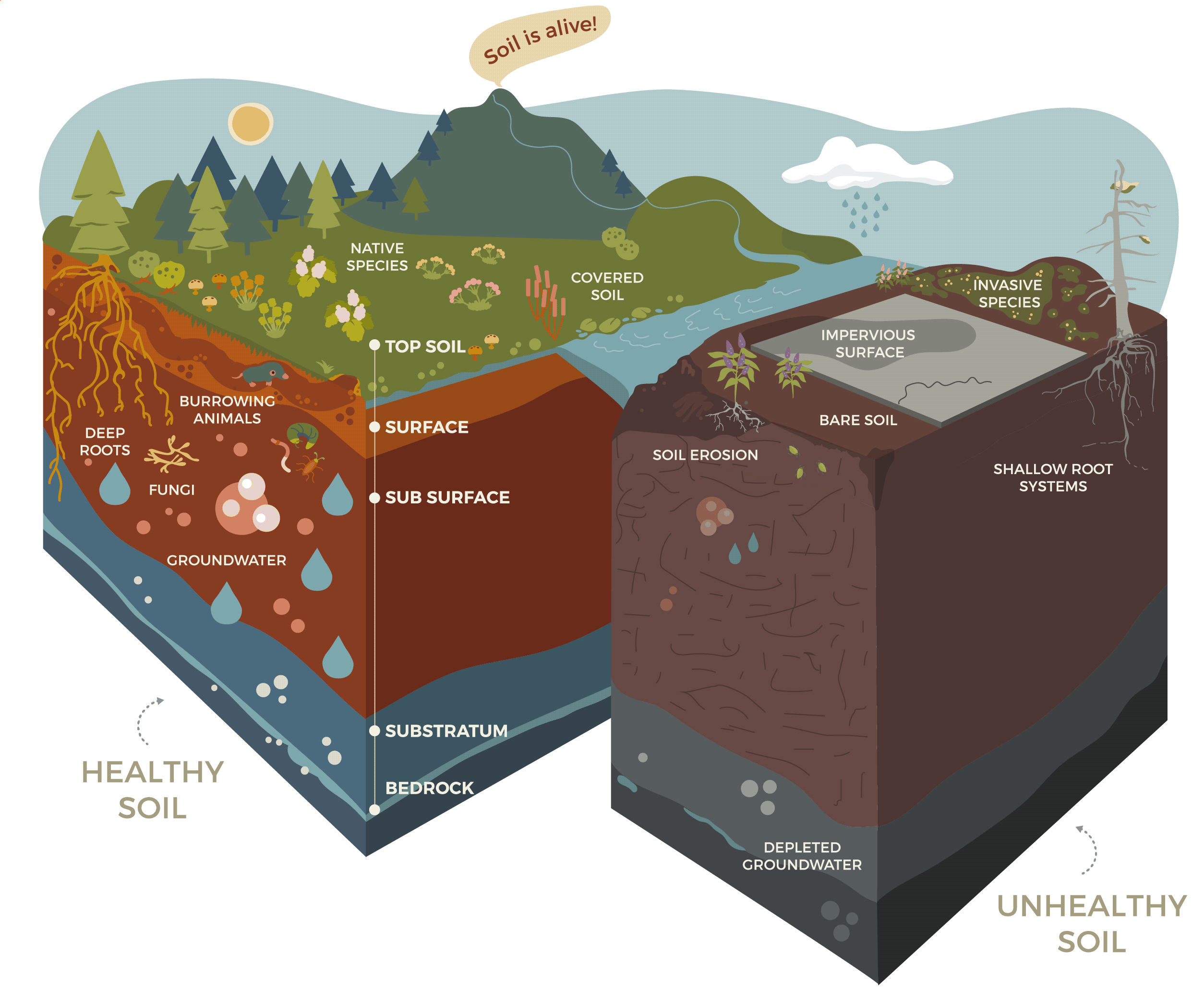 Soil Infographic Healthy Soil vs Unhealthy Soil Tualatin Soil water Conservation District